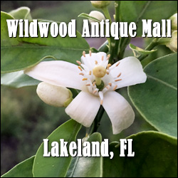 Wildwood Antique Mall - Lakeland